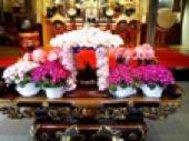 お釈迦様とお花.jpg